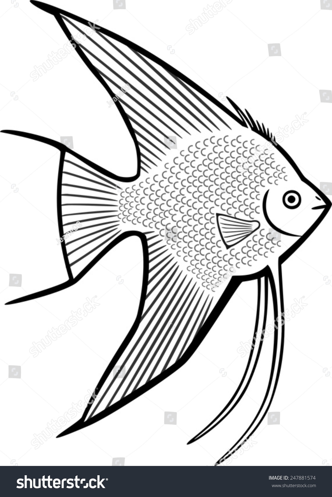 Angelfish Stock Vector 247881574