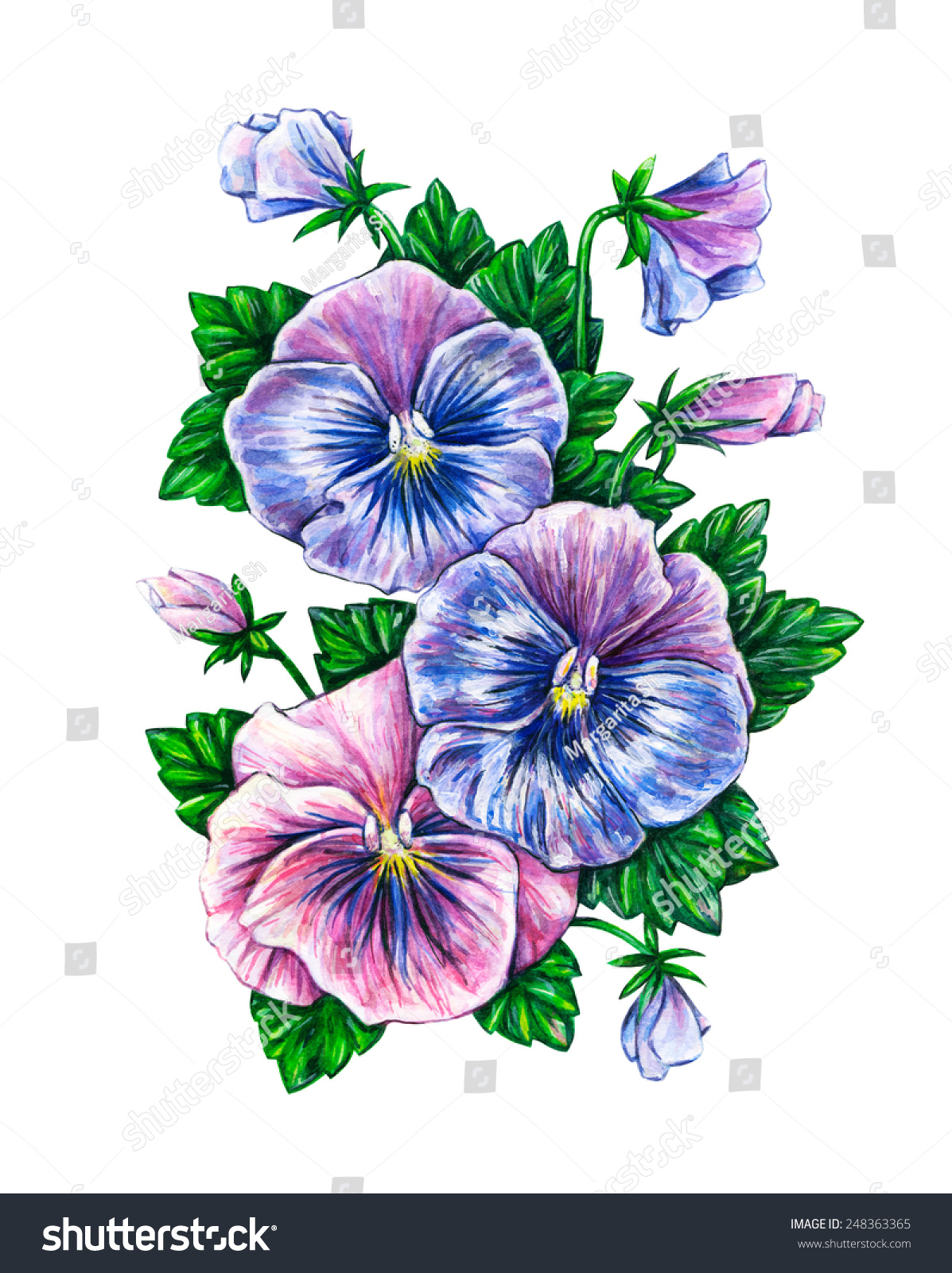 pansy flower drawing - photo #28