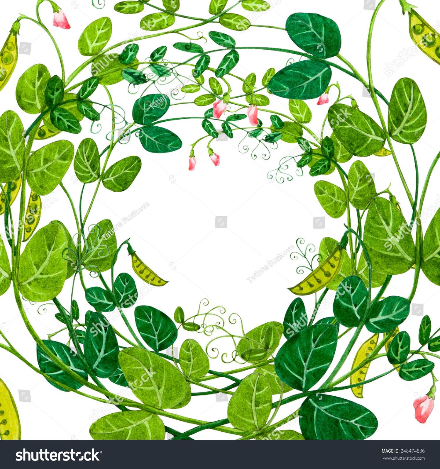 Sweet Pea Watercolor Decorative Frame Stock Illustration 248474836 ...