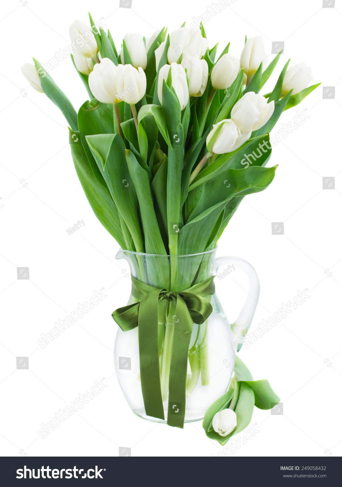 Bouquet fresh white tulips glass vase stock photo 249058432 bouquet of fresh white tulips in glass vase with green bow isolated on white background floridaeventfo Gallery