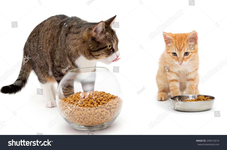Big Cat Little Kitten Eat Dry Stock Shutterstock