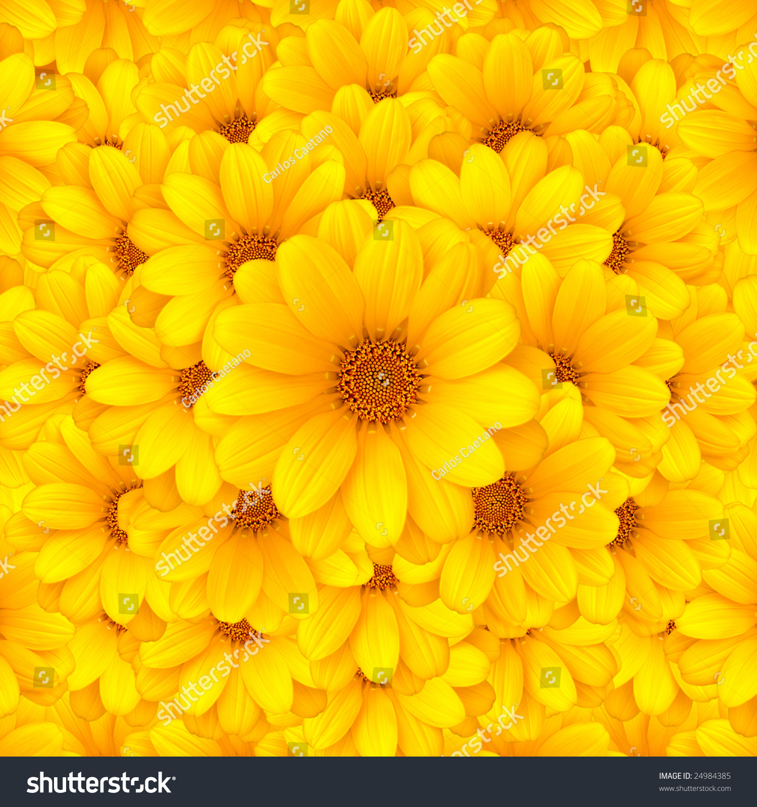 Beautiful Yellow Flower Background Stock Photo Edit Now 24984385