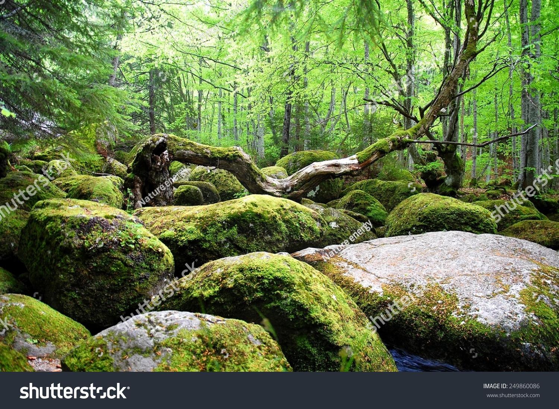 Covered Moss Rocks Tree Fairytalelike Magical Stock Photo ...