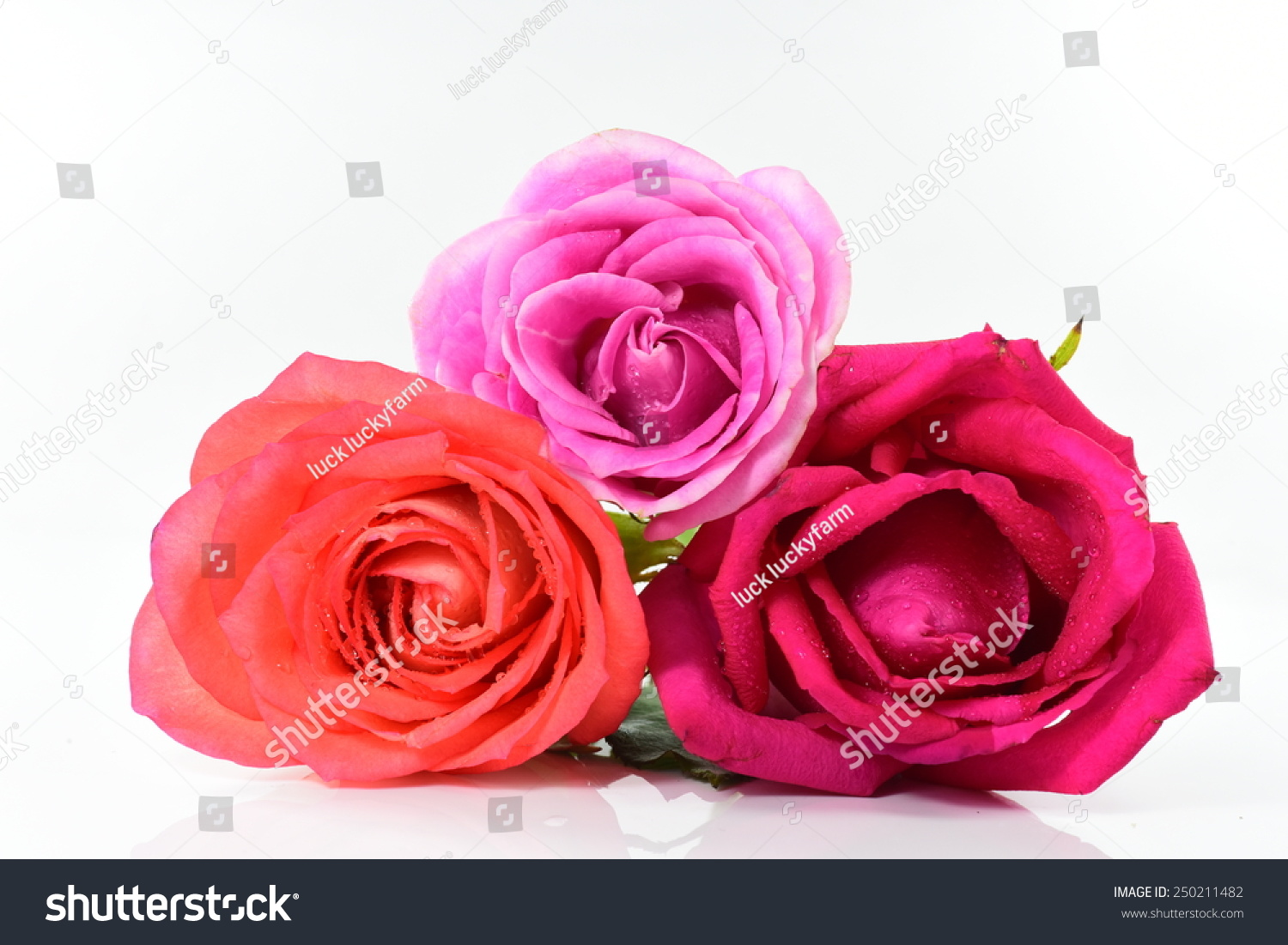 Beauty Roses Flowers Variety Colours Stock Photo Edit Now