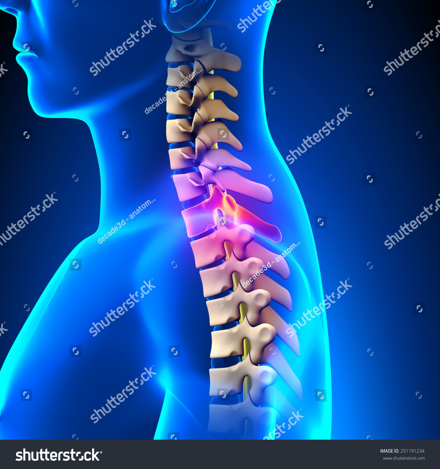 T 1 Disc Thoracic Spine Anatomy Stock Illustration 251191234