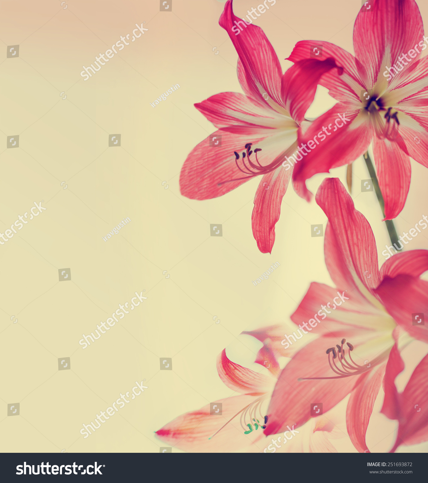 Flower Background Lily Flower Vintage Color Stock Photo Edit Now