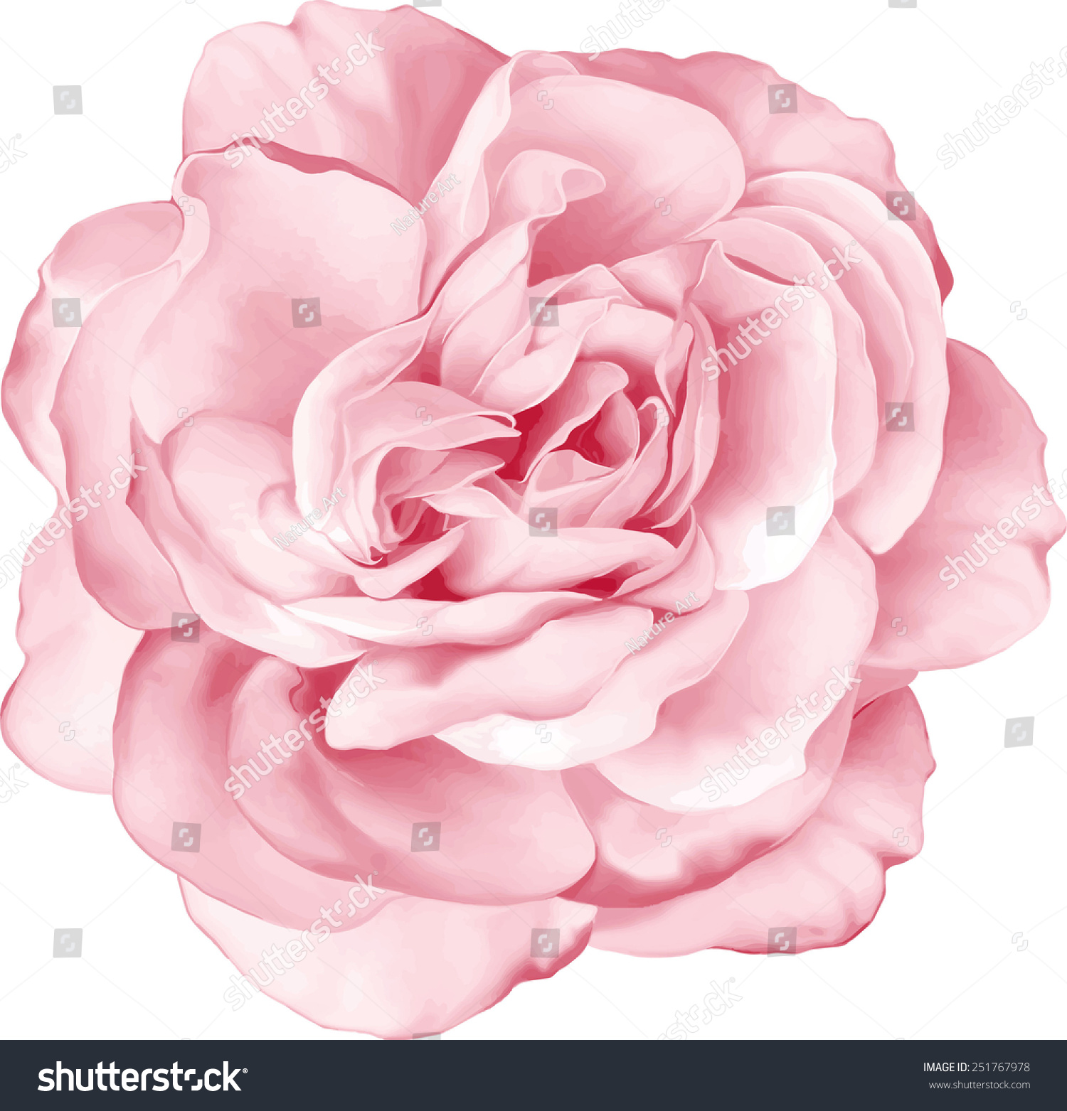 Beautiful Light Pink Red Rose Flower Stock Vector Royalty Free