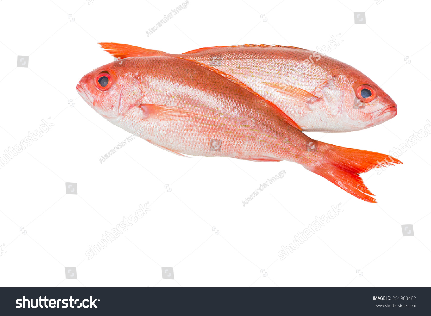 Red snapper limits in florida download pdf for Types of red fish