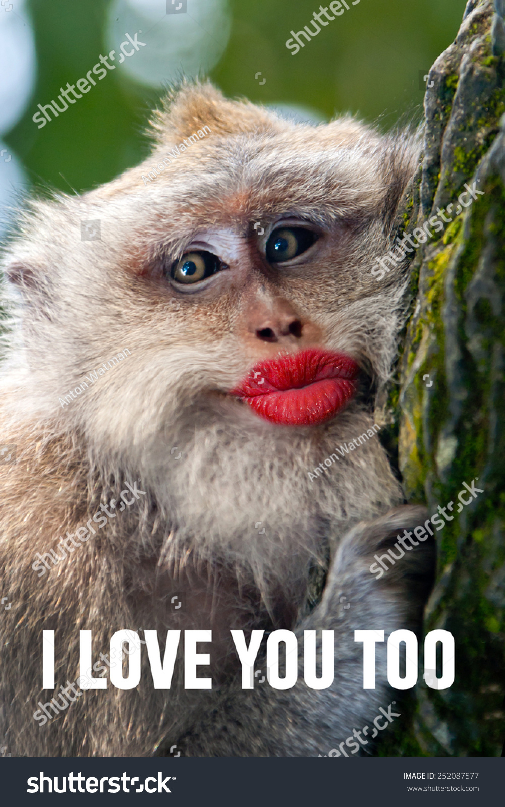 Love monkey dating
