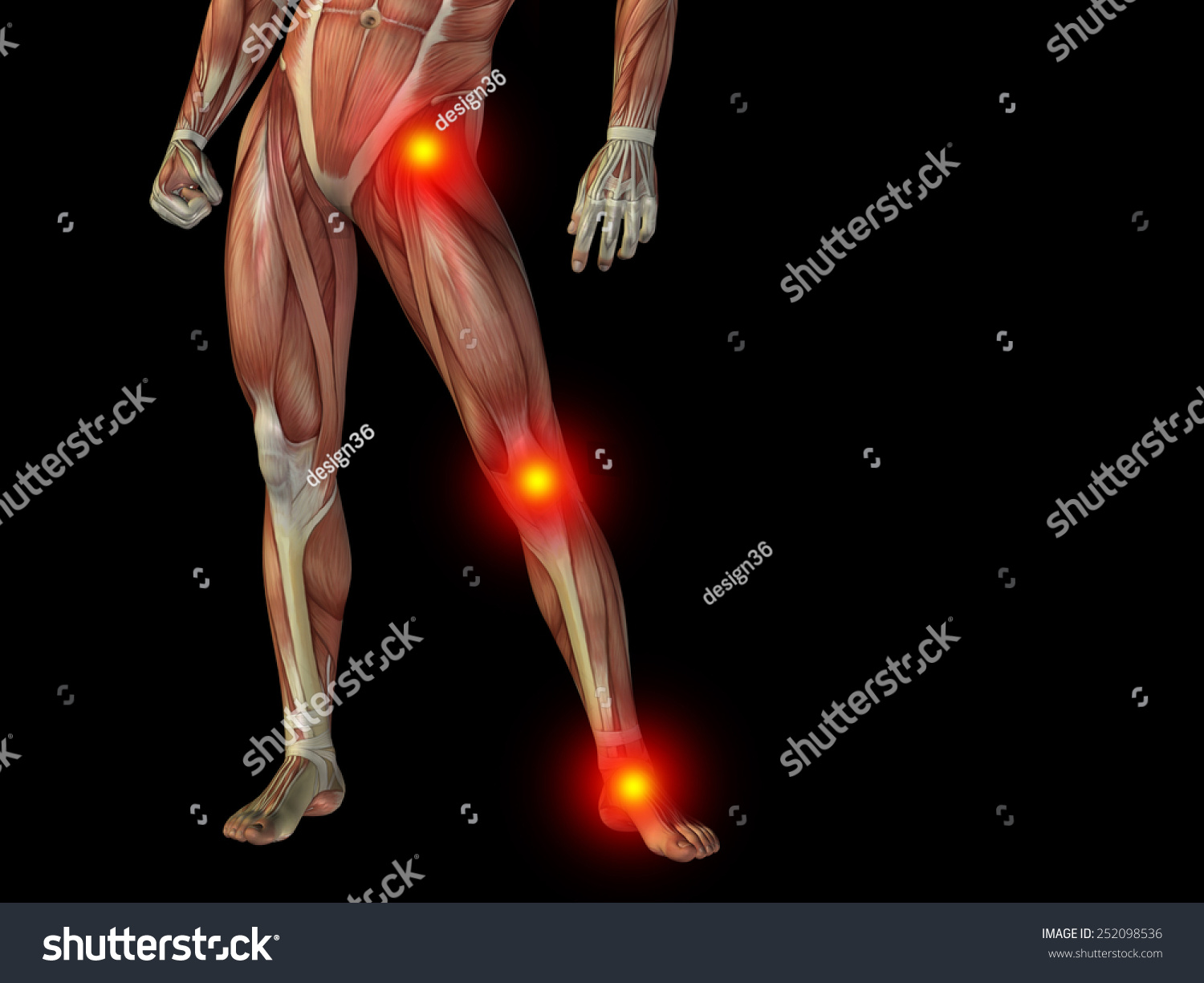 Conceptual Human Man Anatomy Lower Body Stock Illustration Royalty
