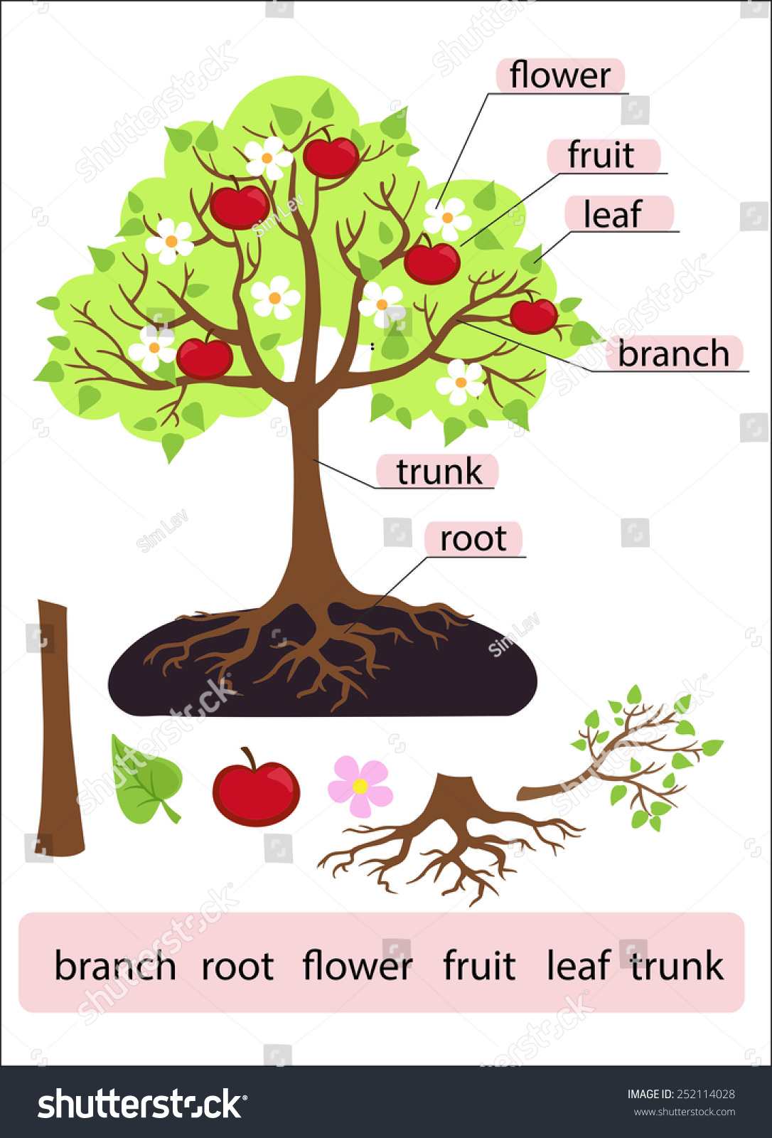 Parts Treeclipart Tree Structure Trunk Root Stock Vector 252114028