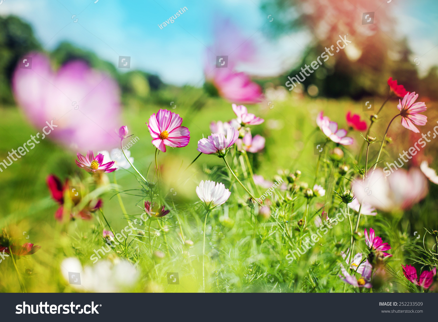 beautiful garden flowers summer flower background - Beautiful Garden Pictures