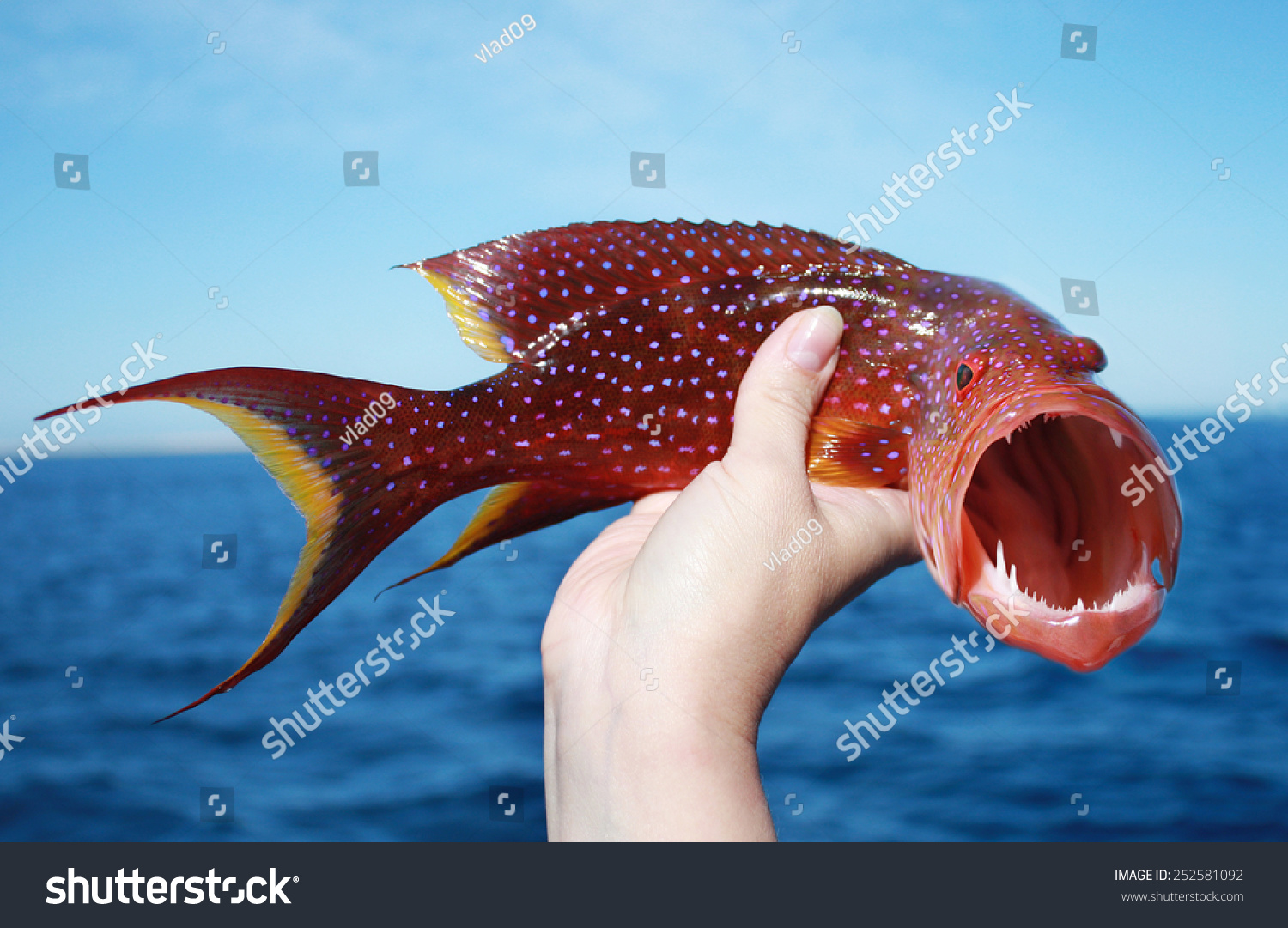 Terrible Fish Stock Photo (Royalty Free) 252581092 - Shutterstock