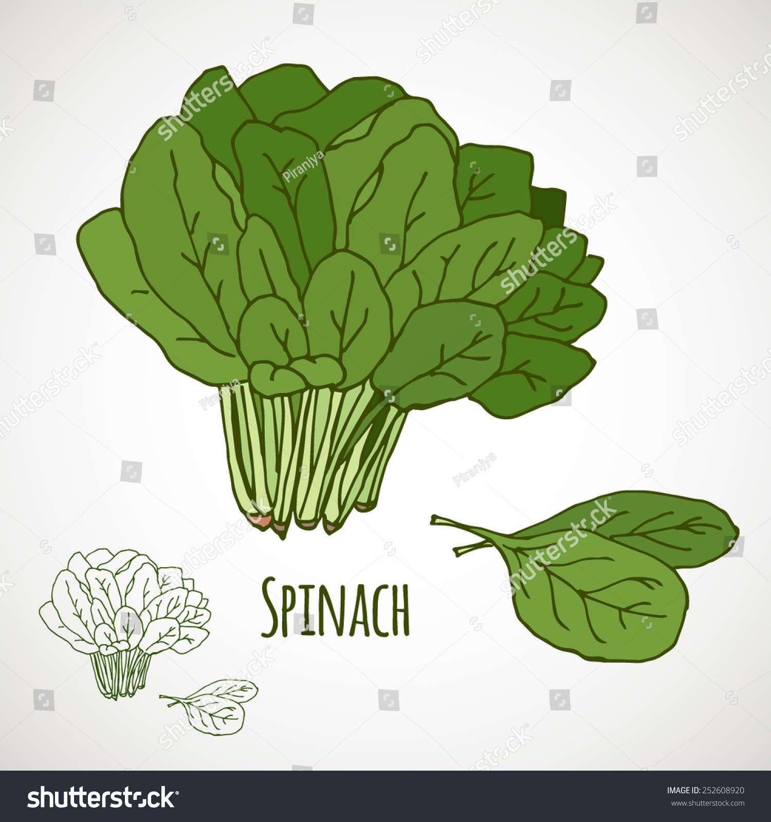 Spinach Green Salad Leaf Vegetable Healthy Stock Vector 252608920 ...