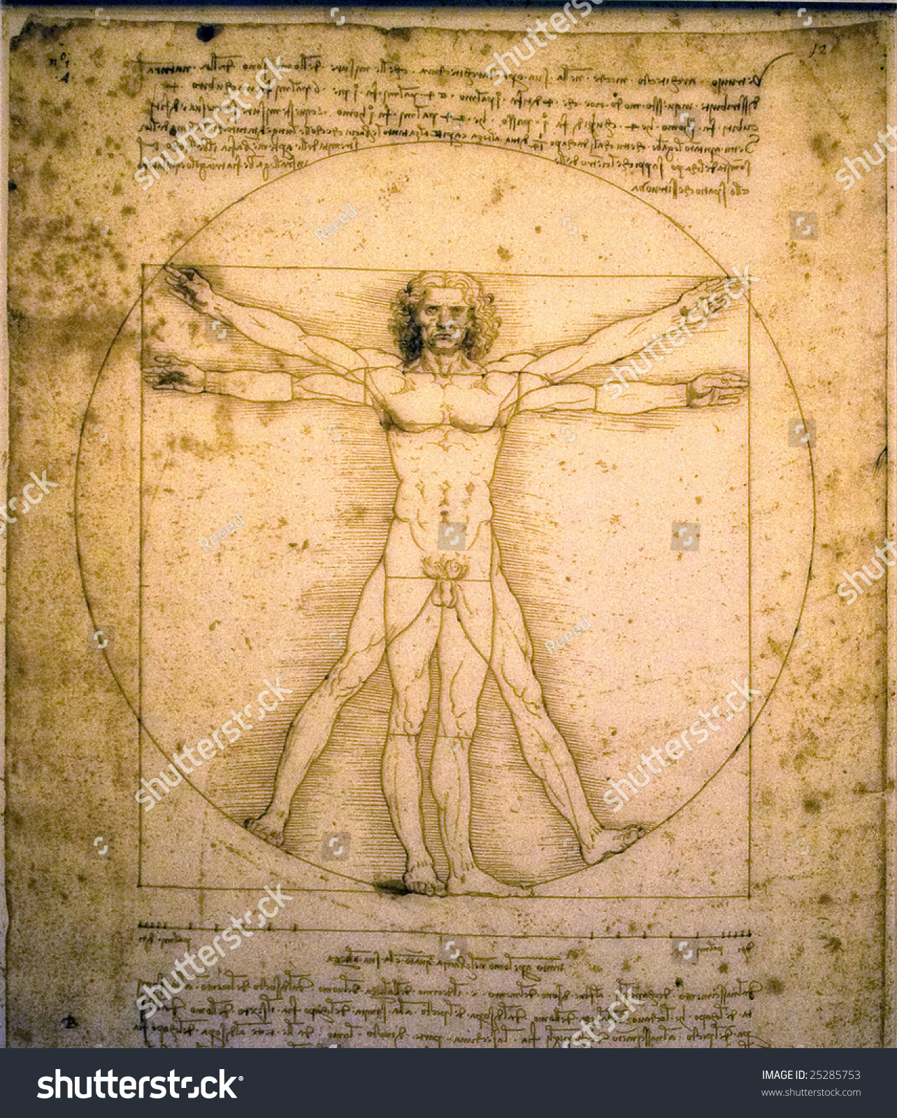 vitruvian man leonardo da vinci stock photo 25285753 shutterstock. Black Bedroom Furniture Sets. Home Design Ideas
