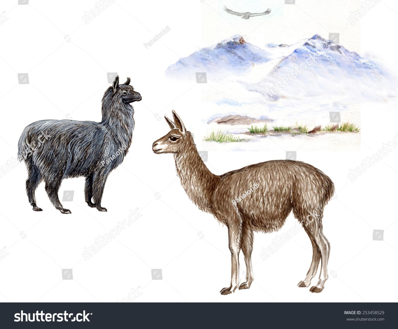 Snow Elk Opt Pack >> Llama Lama Glama Alpaca Vicugna Pacos Stock Illustration 253458529 - Shutterstock