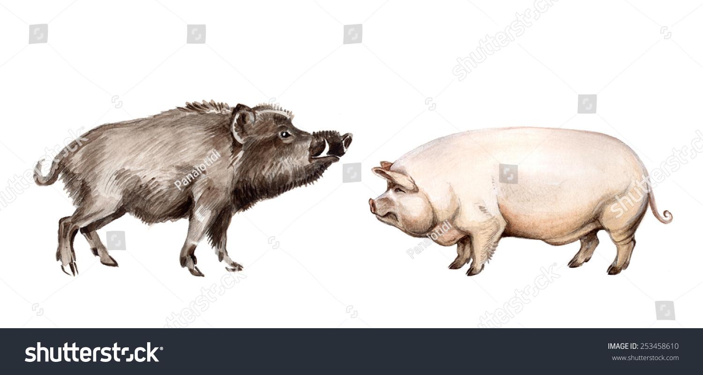 Wild Boar Domestic Pig...