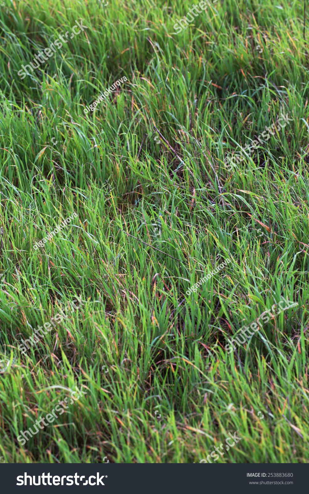 wild grass texture. Bright Green Wild Grass Texture I