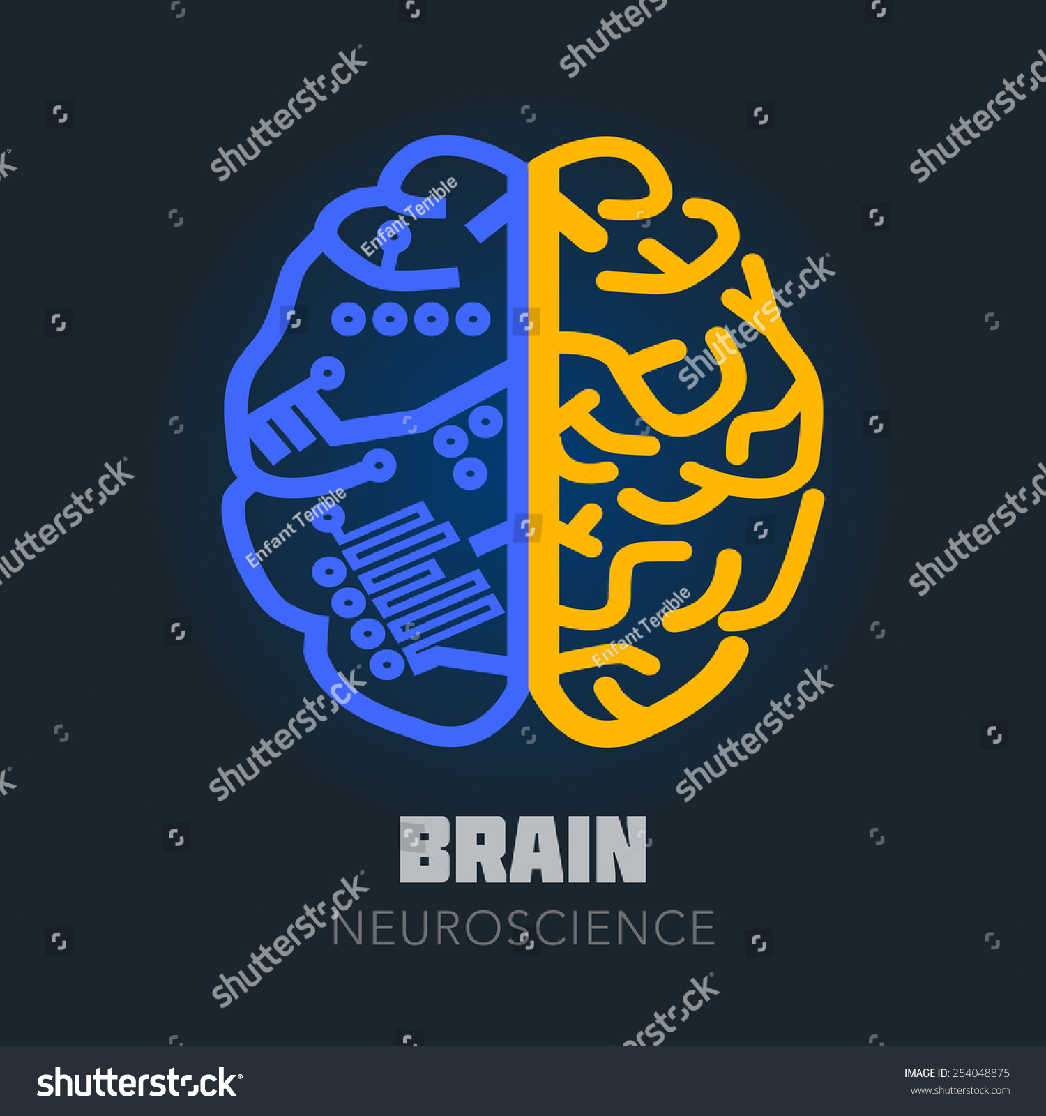 Left Right Human Brain Hemispheres Vector Stock Vector