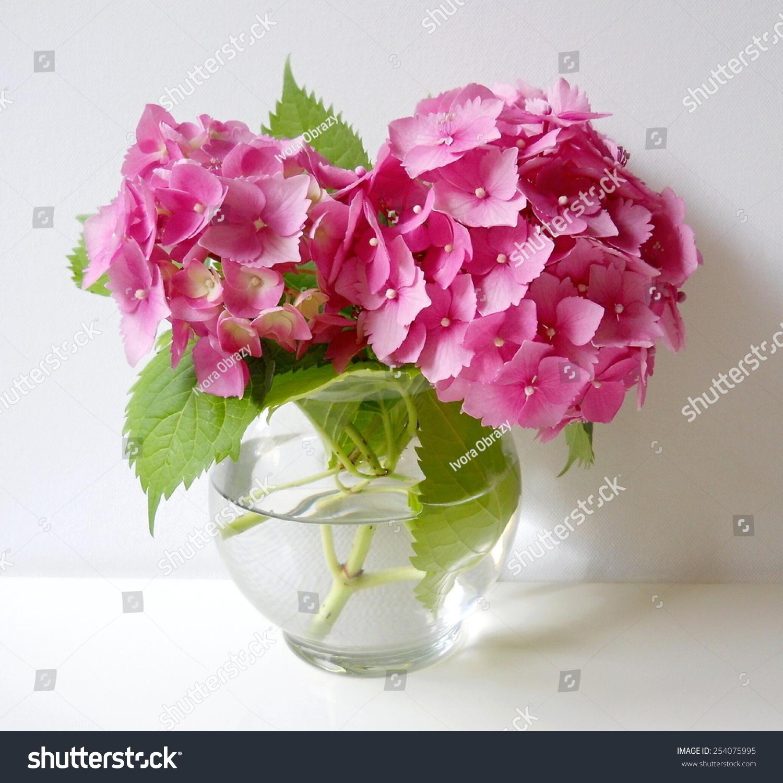 Bouquet Hydrangea Flowers Still Life Pink Stock Photo Edit Now