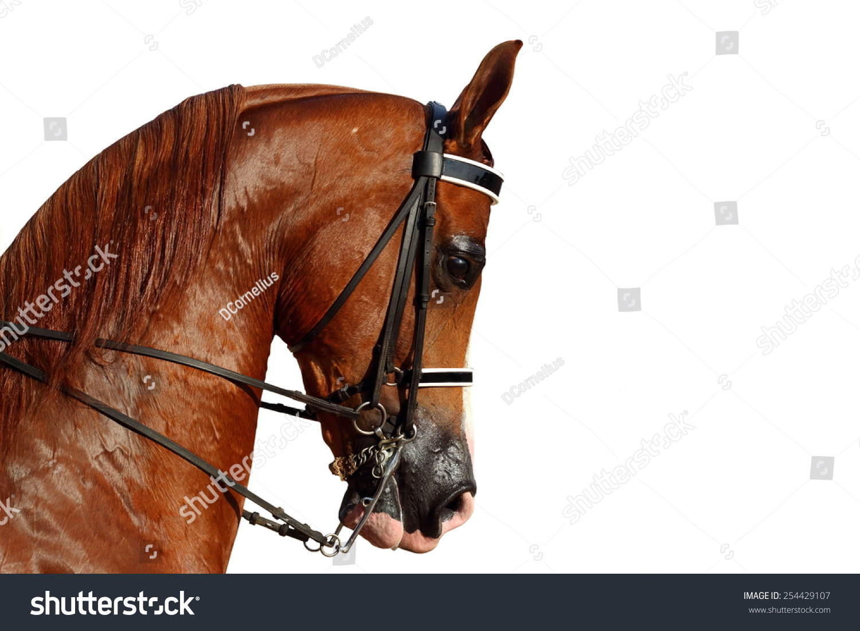 Beautiful Brown Arabian Horse Head Black Stock Photo Edit Now 254429107