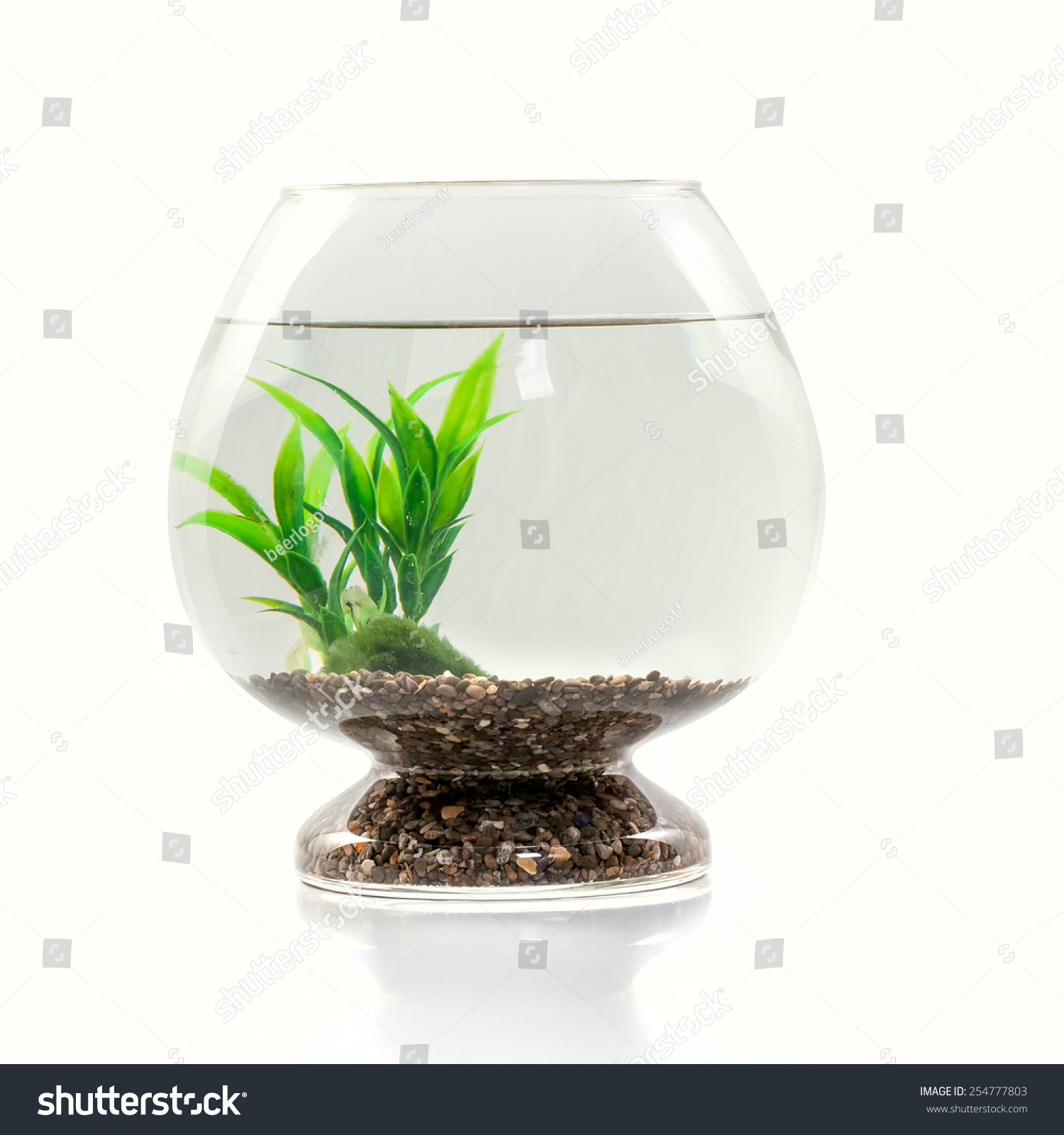 Aquarium algae and stones isolated on white stock photo for White algae in fish tank