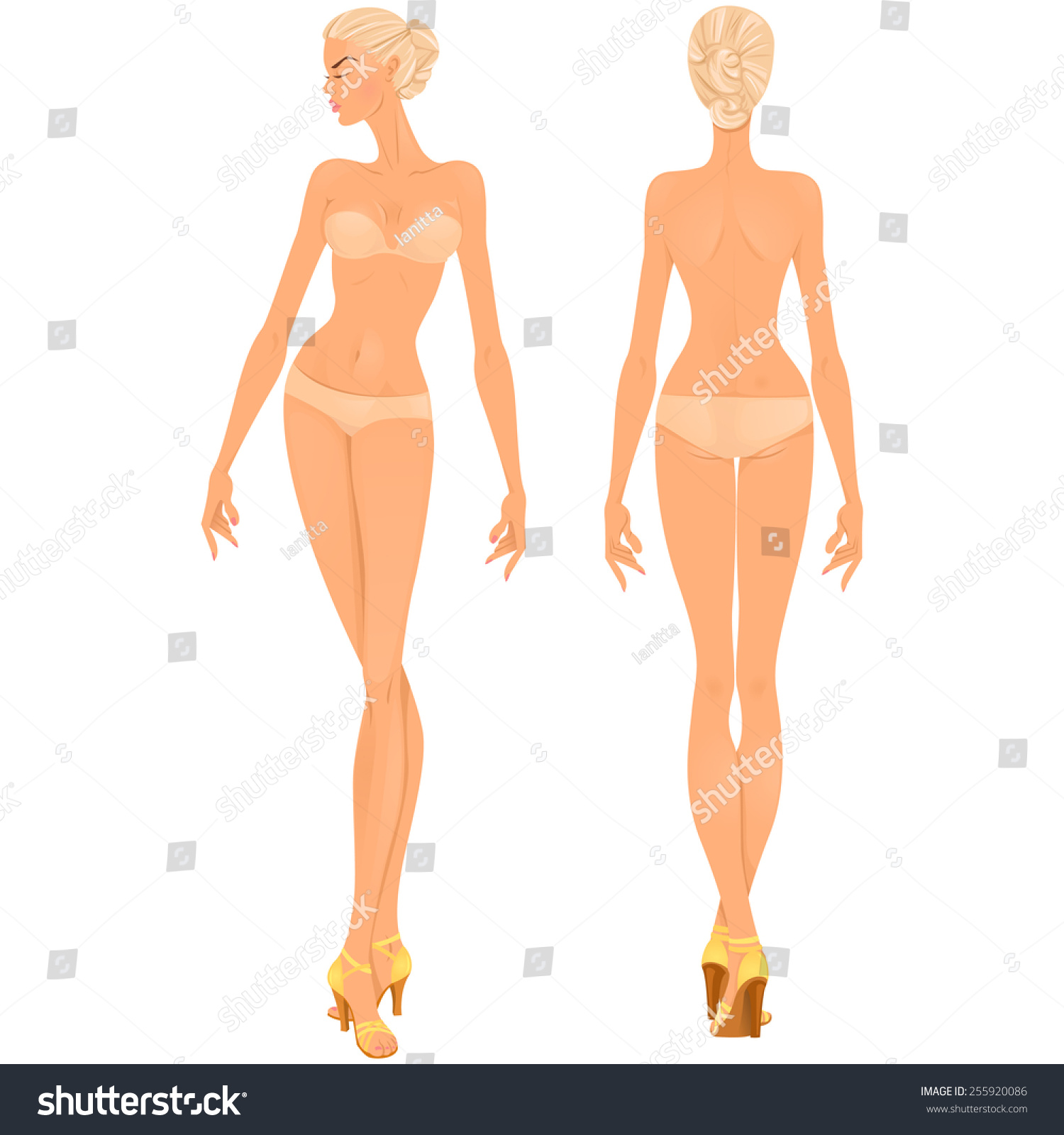 Body Template Front And Back Views Isolated Vector Illustration