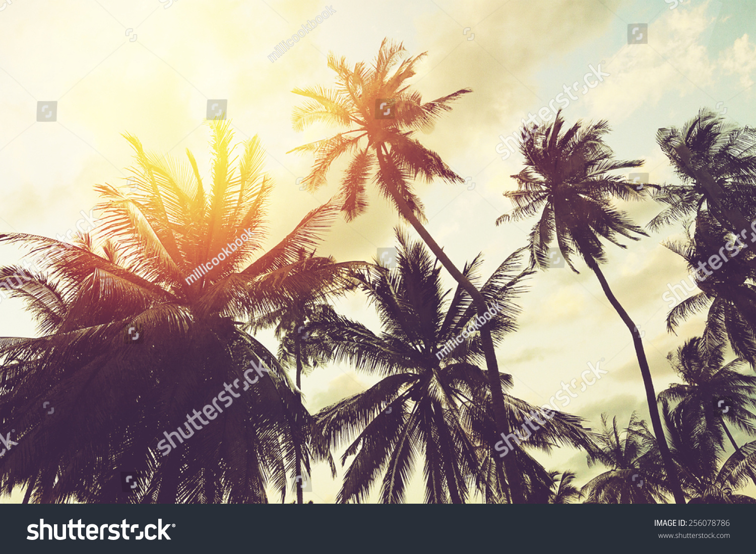 Retro Palm Wallpaper PC Most Beautiful Images