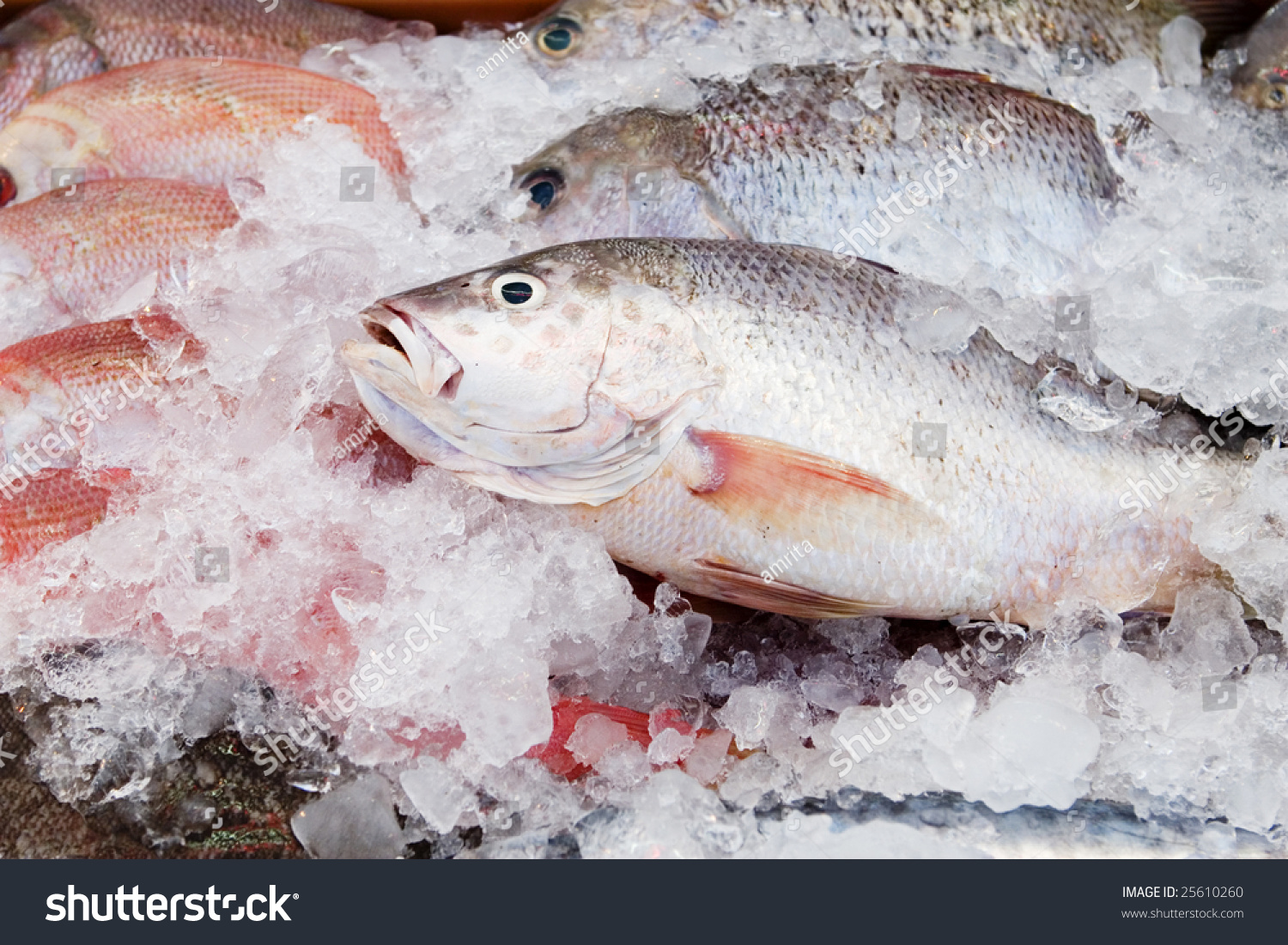 Fresh frozen fish stock photo 25610260 shutterstock for How to freeze fish
