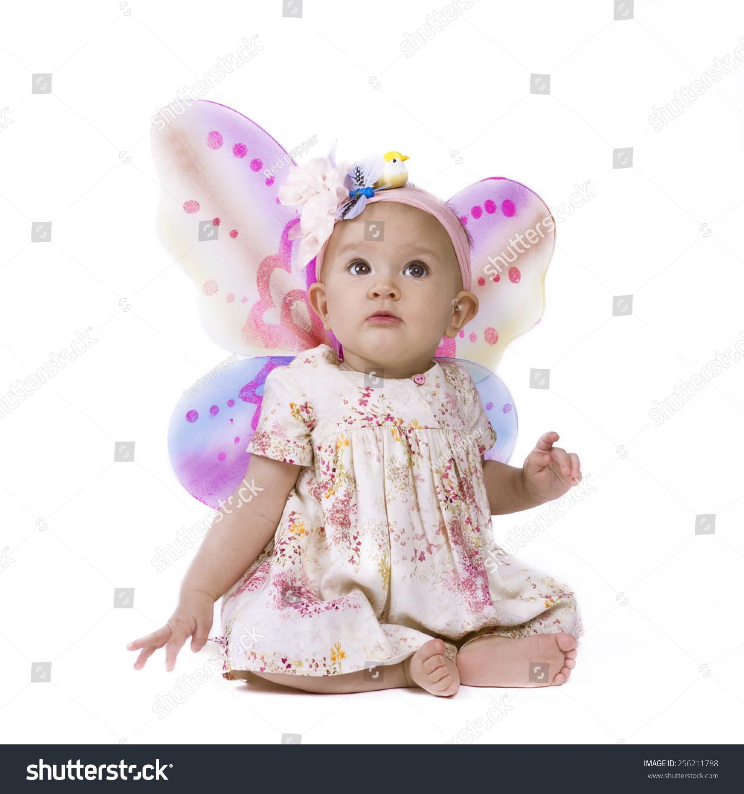 Isolated of a cute baby girl with butterfly wings looking up