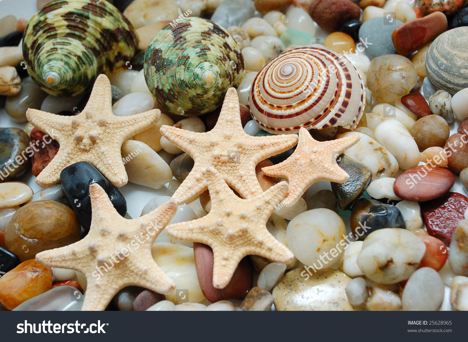 stock-photo-set-of-tropical-shells-marbl