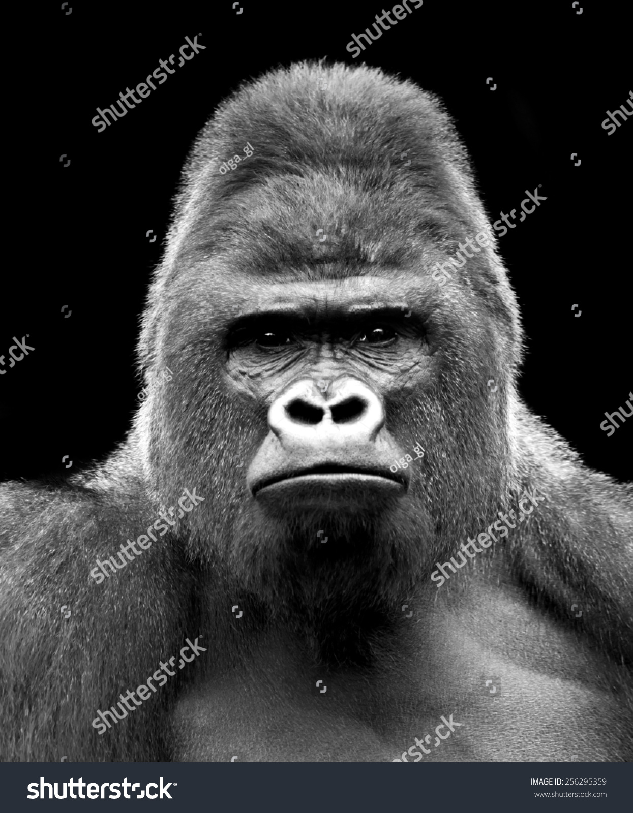 royalty free black and white closeup portrait of a 256295359 stock