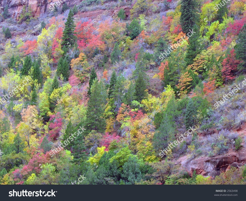 Fall colors in Zion National Park, Utah | EZ Canvas