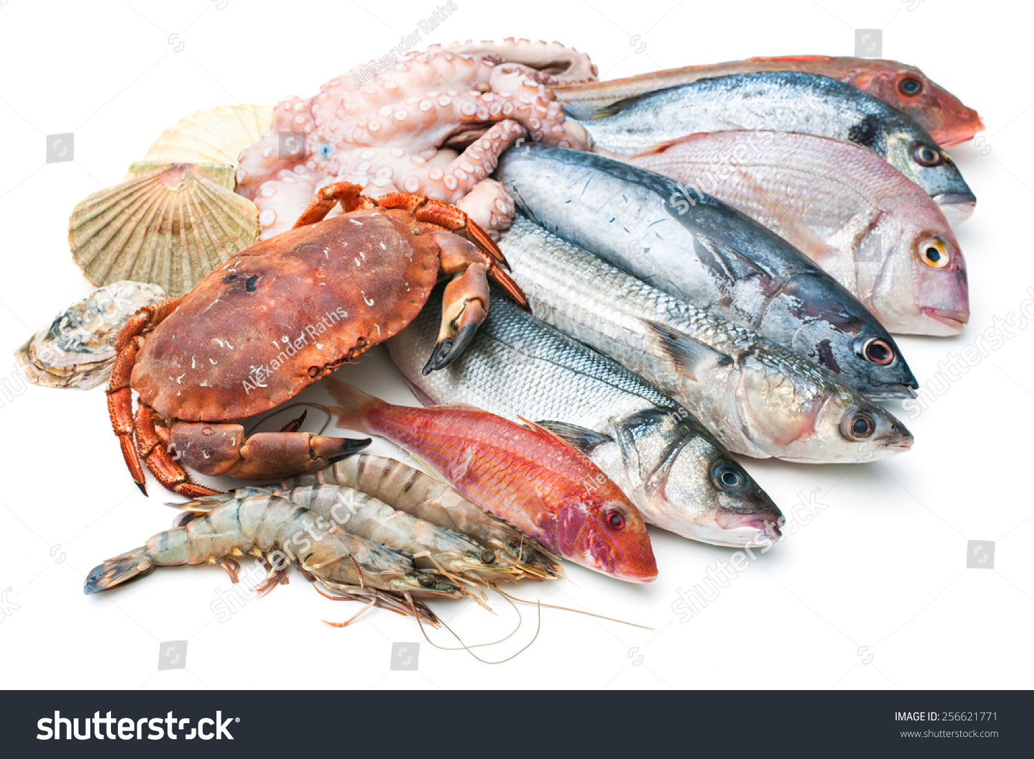 Fresh catch of fish and other seafood isolated on white for Fish and seafood