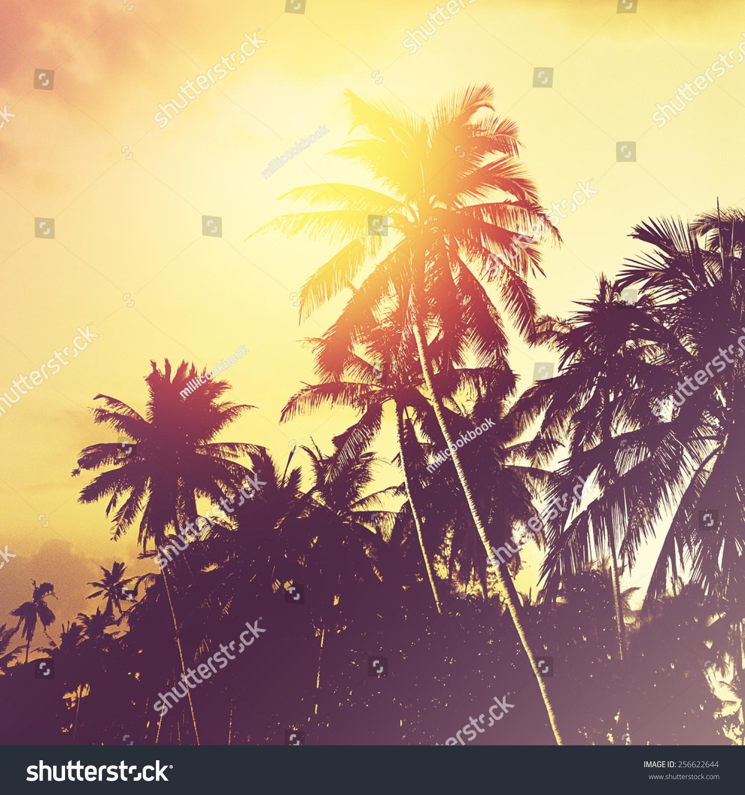 Coconut Palm Trees Sunset Tropical Beach Stock Photo