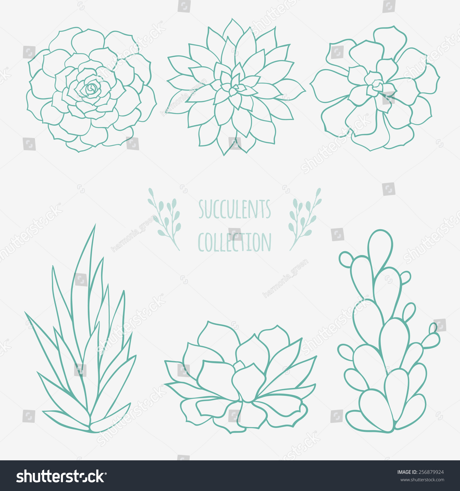 Set Six Hand Drawn Succulents Linear Stock Vector Royalty Free 256879924