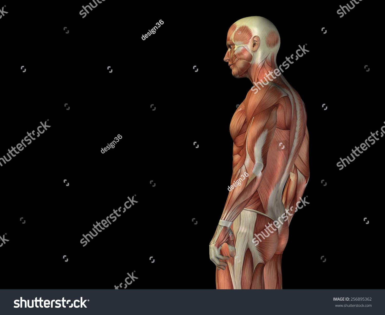 Concept Conceptual Human Man 3 D Anatomy Stock Illustration