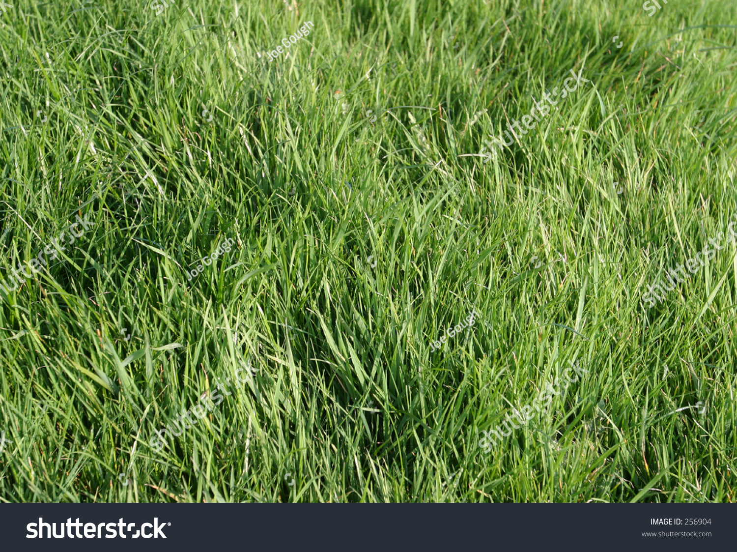 how to get lush grass