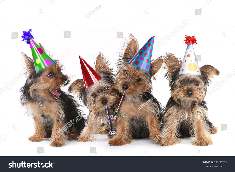 Dog Happy Birthday Full Of Cake