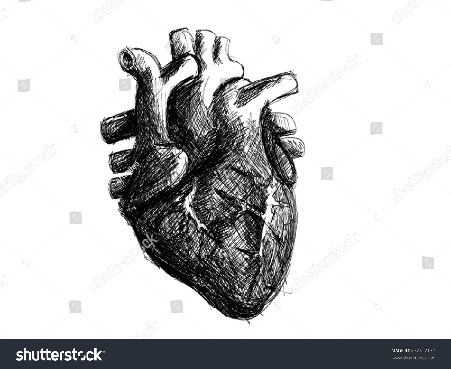 A Human Heart Black And White | www.imgkid.com - The Image ...