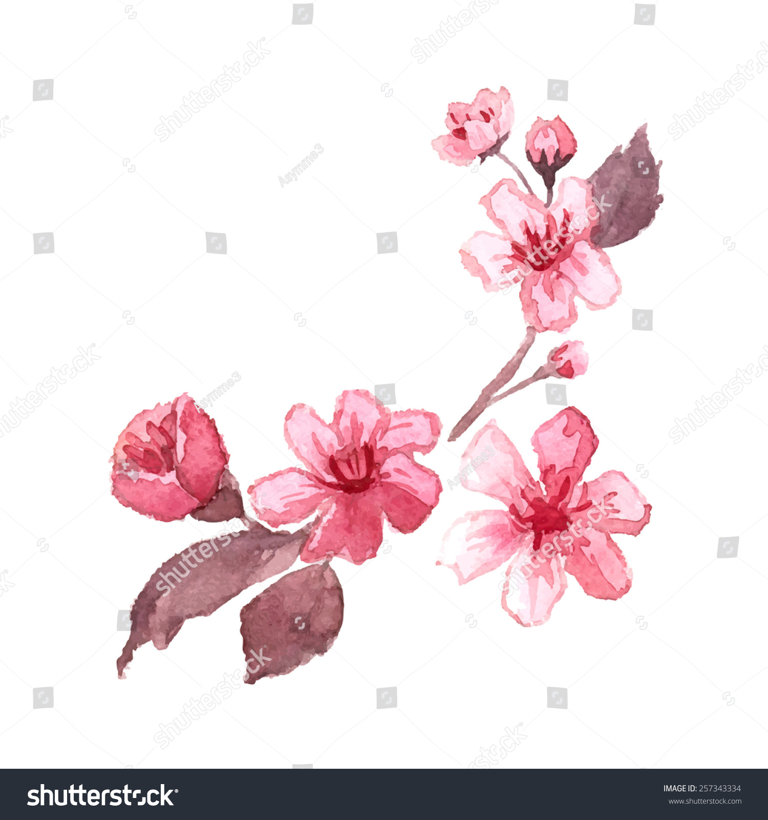 Watercolor Blossom Cherry Tree Branches Hand Stock Vector 257343334