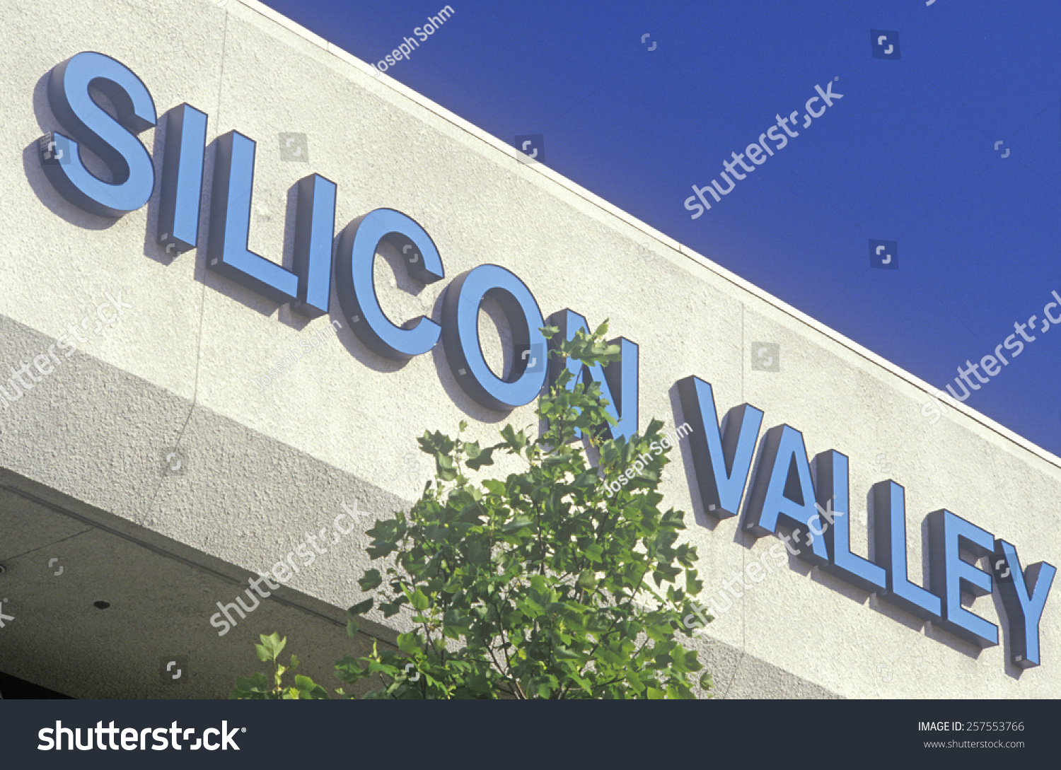 Stock options silicon valley