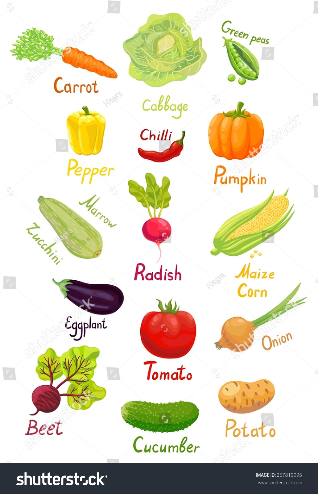 Fresh Ripe Vegetables Garden Their Names Stock Vector 257819995 ...