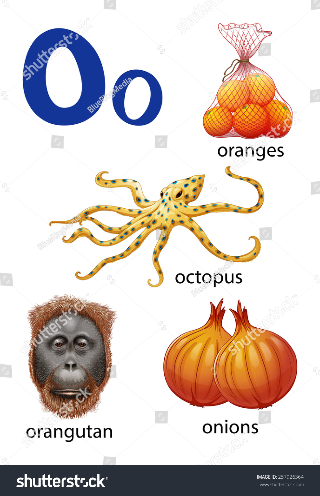 Things That Start Letter O On Stock Vector   Shutterstock