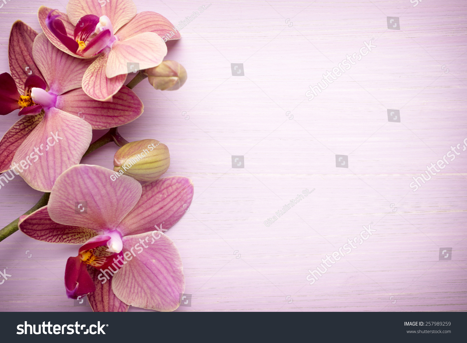 Pink Orchid Flower Greeting Background Stock Photo Edit Now