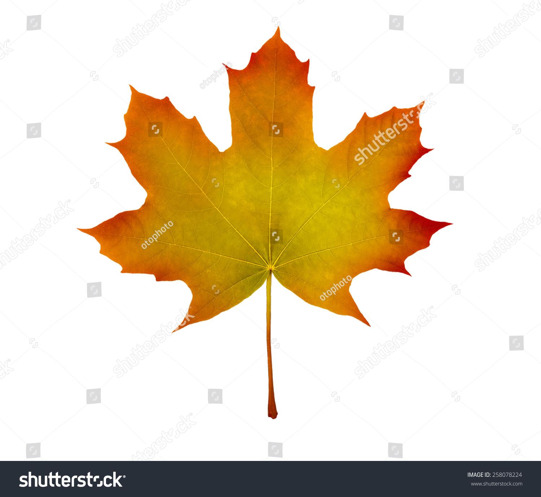 Maple Leaf Stock Photo Green Leaf Stock Photo Edit Now 258078224