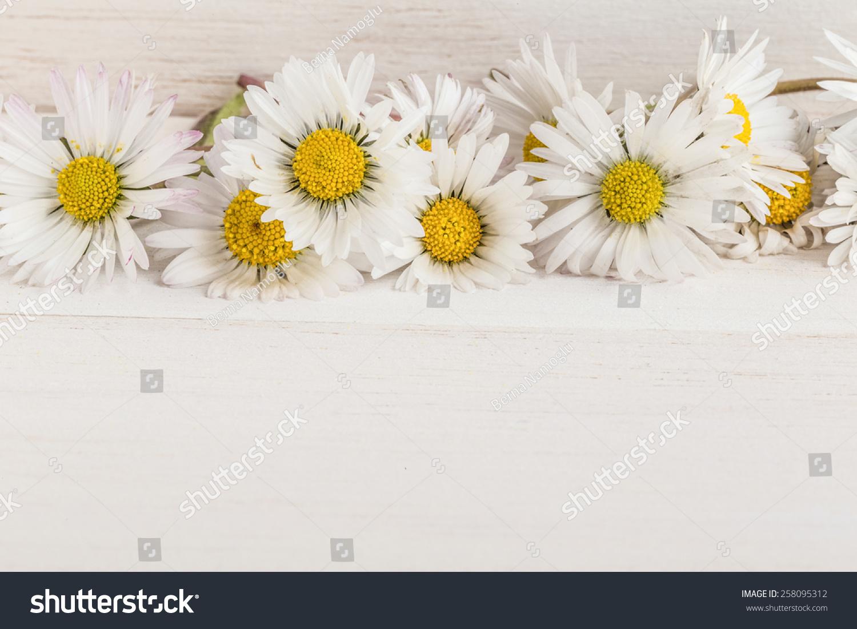 Daisy flowers border stock photo royalty free 258095312 shutterstock daisy flowers as a border izmirmasajfo