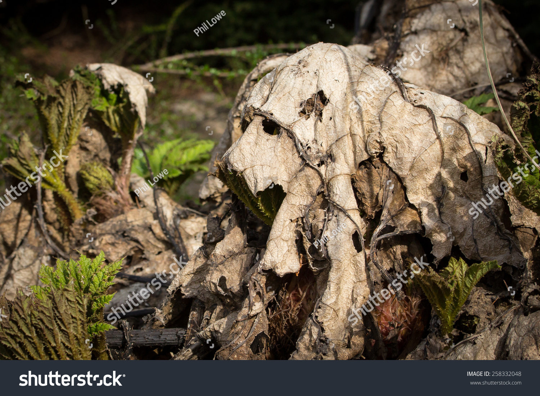 stock-photo-dead-leaves-on-tree-stump-in