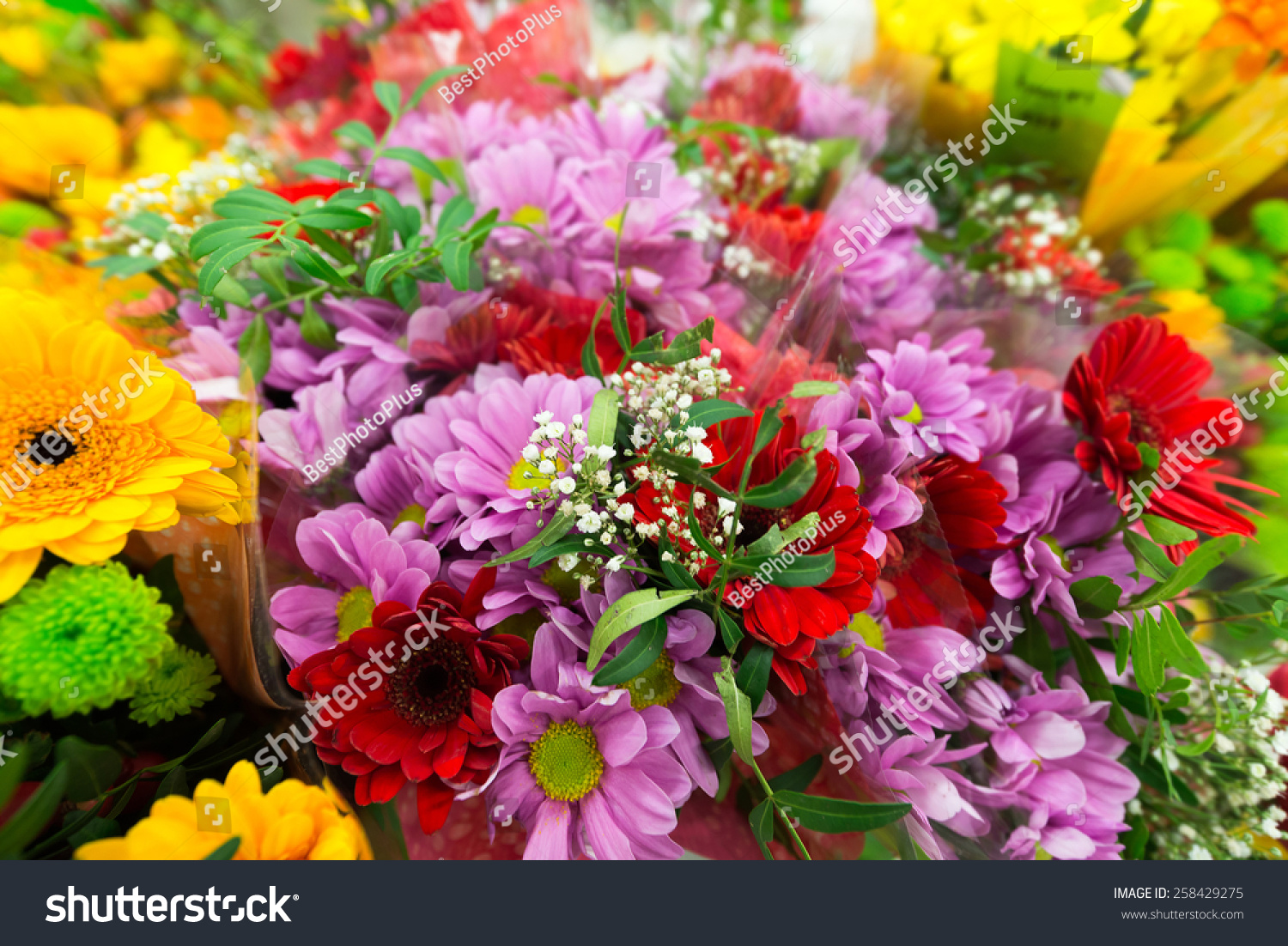Flower Bouquet Different Flowers Stock Photo & Image (Royalty-Free ...