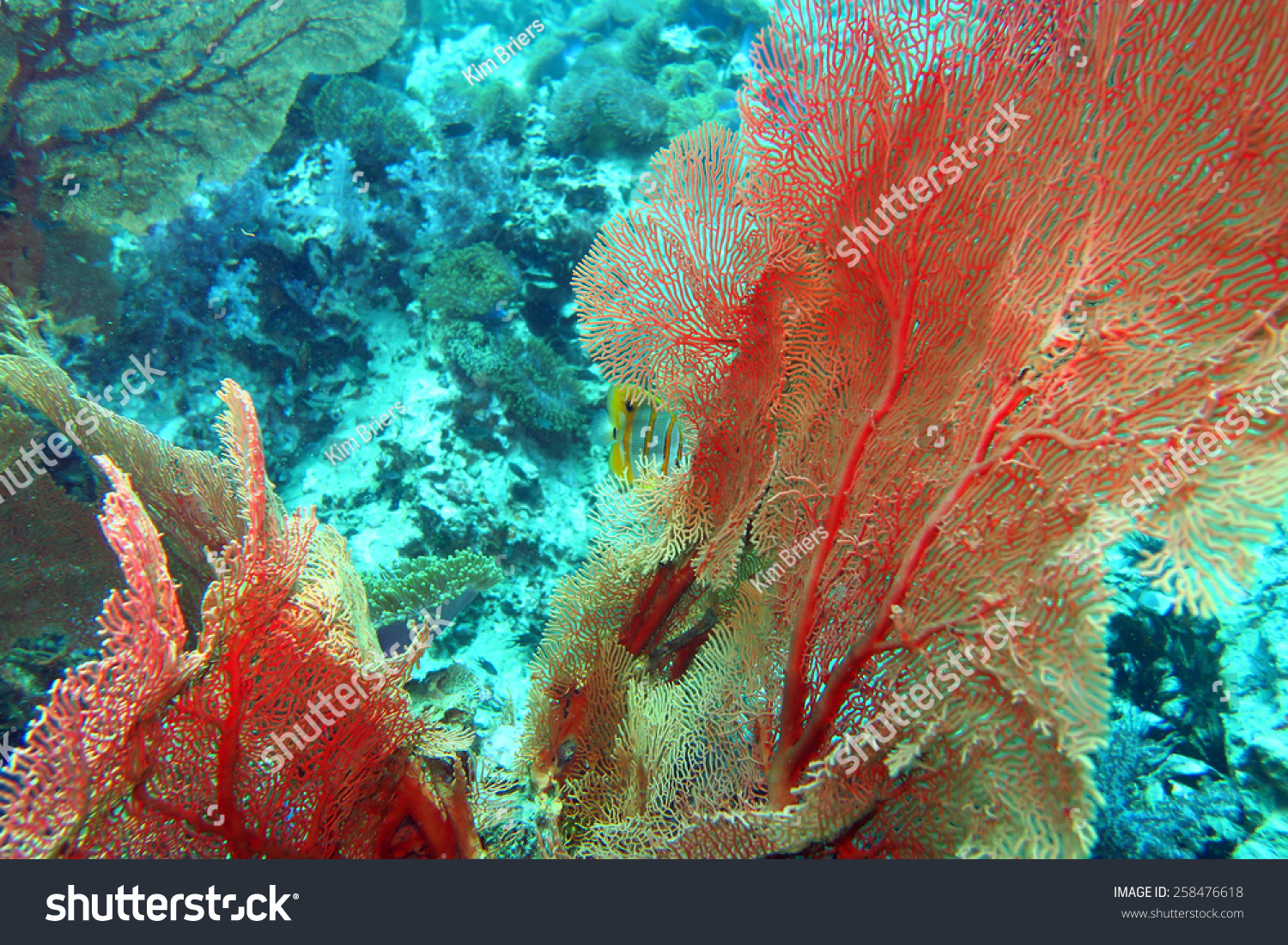 Scuba diving coral reef thailand stock photo 258476618 shutterstock - Where to dive in thailand ...